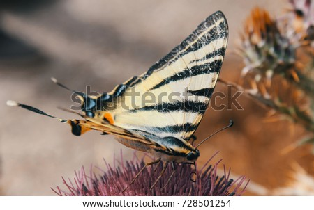 Closeup butterfly on flower ,butterfly and flower,butterfly on a flower blurry background,butterfly on flower,butterfly on flower in garden or in nature #728501254