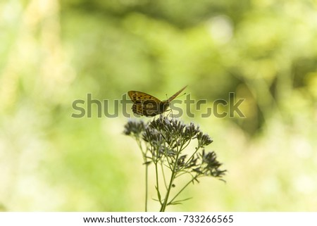 Closeup butterfly on flower ,butterfly and flower,butterfly on a flower blurry background,butterfly on flower,butterfly on flower in garden or in nature #733266565