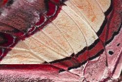 Closeup butterfly wings diamond butterfly