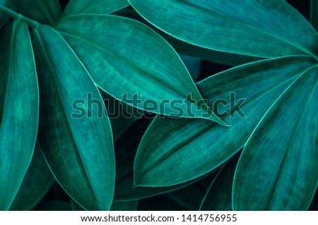 Closeup dark green leaf. Abstract leaves nature background. #1414756955