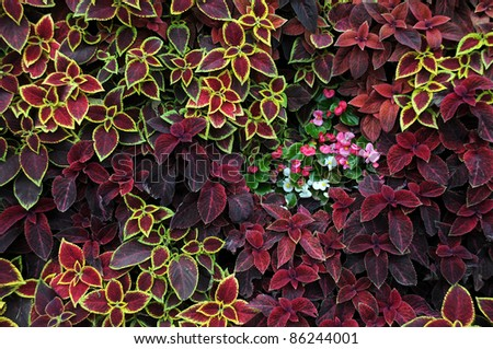 Closeup design of ground covering plants and ornamental flowers
