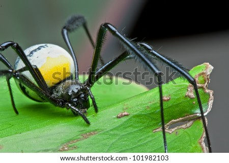 closeup detail of large spider on a green leaf