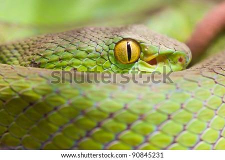 Closeup eye of snake