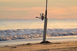 Closeup fishing on the sandy beach at sunset