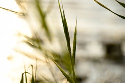 closeup from a blade of grass with waterreflections and sunlight in the background;