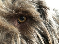closeup from a dog's eye