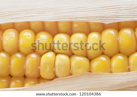 Closeup from some dried corn ears showing the kernels with good detail