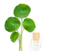 Closeup Gotu Kola leaves ( Asiatic pennywort, Indian pennywort, Centella asiatica ) and bottle of essential oil extract isolated on white background. Tropical medical herbal plant concept.