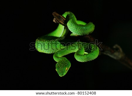 Closeup green snake in rain forest, Thailand