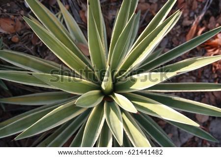 Closeup green spike leaves