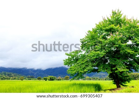 closeup green tree, beautiful view rice field and mountain with mist. soft-focus and over light in the background - Shutterstock ID 699305407