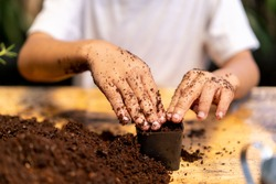 closeup hand child planting seeds in pots.Planting young tree by kid hand on back soil as care and save wold concept