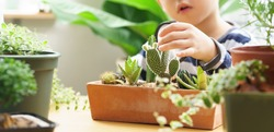 Closeup, Hand of young kid gently touch new stem of cactus he grow with care, one hand holds magnifying glass. Gardening, Nature education, Montessori and observation skills concept.