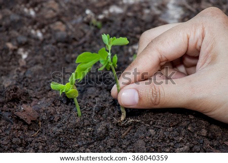Closeup hand planting young tree in soil,save world concept #368040359