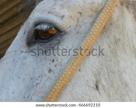 Closeup horse eye. #466692110