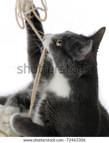Closeup image of a frisky kitten playing with yarn.  Motion blur on some string and kitty's paws.  Isolated on white.