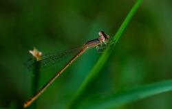 Closeup image of damsel fly