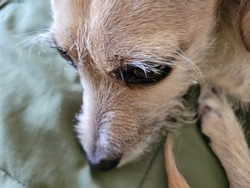 Closeup image of dog curled up and glancing up