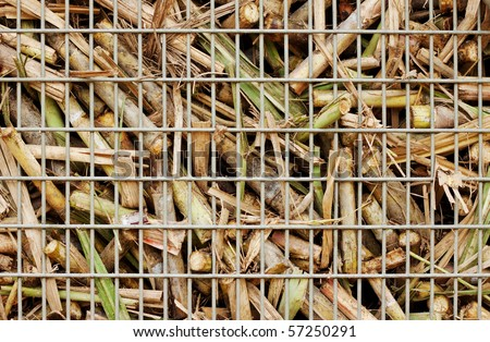 "Closeup image of freshly harvested sugar cane on a cane train ""bin"" on the way to the sugar mill"