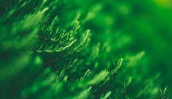 Closeup image of green plants on blurred greenery background, abstract natural landscape using as a wallpaper, ecology and summer concept