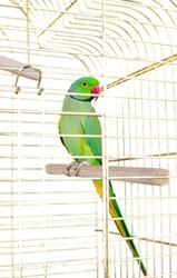 closeup image of the bright parrot