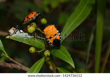 Closeup insect Closeup insect Man-faced bug   #1424736512