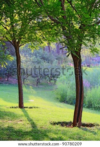 Closeup landscape photo of two trees in Chaoyang park of Beijing China,  in sunshine