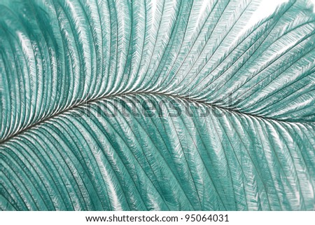closeup large turquoise feather showing detail
