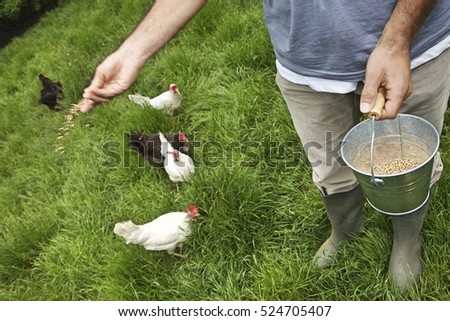 Closeup lowsection of a man feeding hens on grassland
