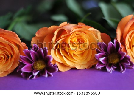 Closeup macro beautiful orange yellow roses purple flowers and leaves composition on the paper background. Colorful floristic wallpapers card picture