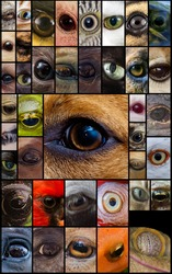 Closeup macro collage of animal eyes from many different species
