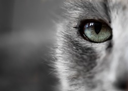 Closeup Macro-photo of a Cats head with colored focus on the eye. Nice Desktop-background.