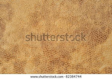 Closeup macro snake texture. Stress, brown background concept.