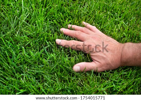Closeup man's hand inspecting green grass lawn, healthy lawn, dull lawnmower blade, damaged grass, new over seed grass, fertilizer application, thick grass, caring for your lawn, no weeds, weeding