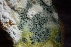 Closeup moldy bun, isolated bread with moldy, fungi texture