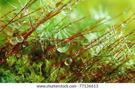 Closeup moss in forest after rain
