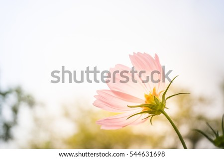 Closeup natural view of pink flower under summer sunlight in garden. Natural seasonal landscape using as backgrounds or wallpapers. Perspective of beautiful scenery plants in nature.
