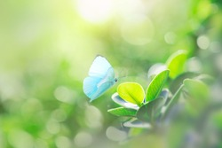 Closeup nature view of butterfly with green leaf on blurred greenery background in garden with copy space using as background natural green plants landscape, ecology, fresh wallpaper concept.
