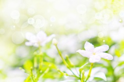 Closeup nature view of flowers and green leaf on blur greenery, fresh air in the morning, using as background and wallpaper, copy space off valentines days and summer