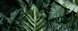 closeup nature view of green leaf and palms background. Flat lay, dark nature concept, tropical leaf