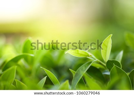 Closeup nature view of green leaf in garden at summer under sunlight. Natural green plants landscape using as a background or wallpaper. #1060279046