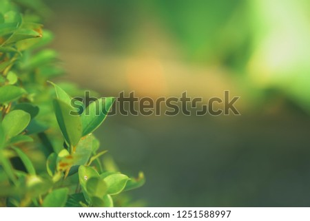 Closeup nature view of green leaf in garden at summer under sunlight. Natural green plants landscape using as a background or wallpaper. #1251588997