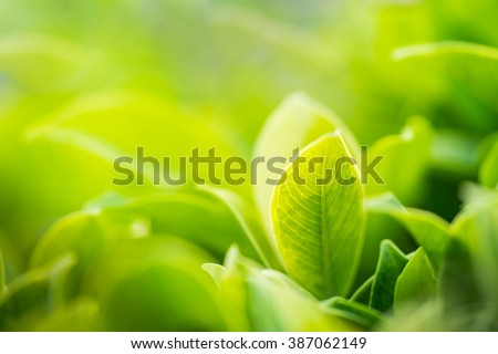 Closeup nature view of green leaf in garden at summer under sunlight. Natural green plants landscape using as a background or wallpaper. - Shutterstock ID 387062149