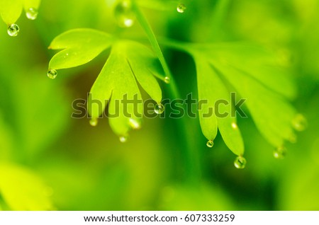 Closeup nature view of green leaf in garden at summer under sunlight with water drops. Natural green plants landscape using as a background or wallpaper. #607333259