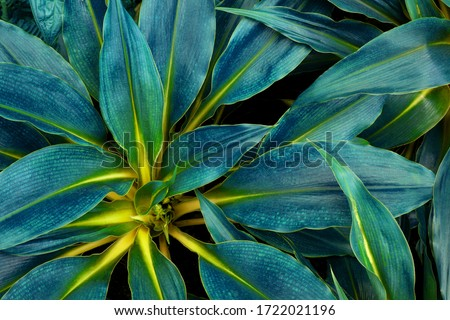 Photo of closeup nature view of green leaf in garden, dark wallpaper concept, nature background, tropical leaf