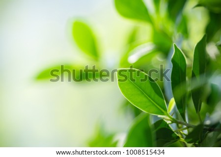 Closeup nature view of green leaf on blurred background in garden with copy space using as background natural greenery plants landscape, ecology, fresh wallpaper concept. #1008515434