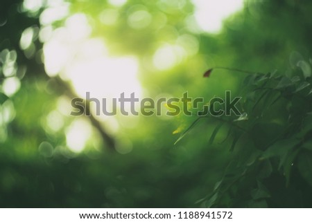 Closeup nature view of green leaf on blurred dark greenery background in garden with copy space using as background natural green plants landscape, ecology, fresh wallpaper concept. #1188941572