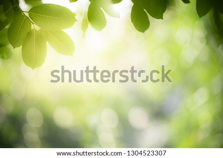 Closeup nature view of green leaf on blurred greenery background in garden with copy space for text using as background natural green plants landscape, ecology, fresh wallpaper concept. #1304523307