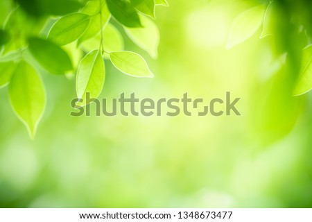 Closeup nature view of green leaf on blurred greenery background in garden with copy space for text using as summer background natural green plants landscape, ecology, fresh wallpaper concept. #1348673477
