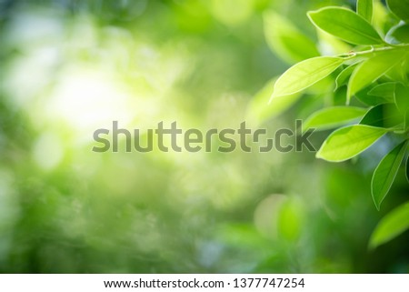 Closeup nature view of green leaf on blurred greenery background in garden with copy space for text using as summer background natural green plants landscape, ecology, fresh wallpaper concept. #1377747254